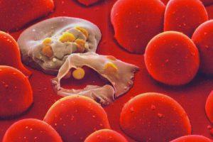 Модифицированный малярийный возбудитель тормозит малярию