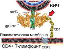 Ученые обнаружили причину стойкости вируса ВИЧ в организме человека