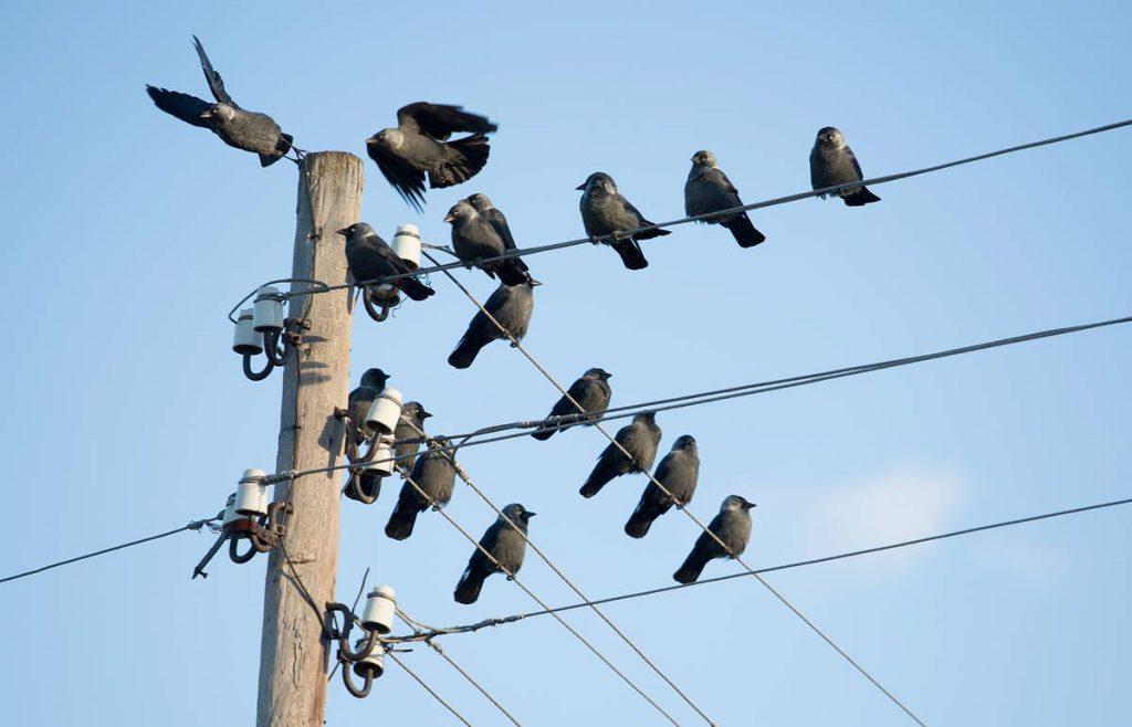 Почему не гибнут птицы, сидящие на высоковольтных проводах?