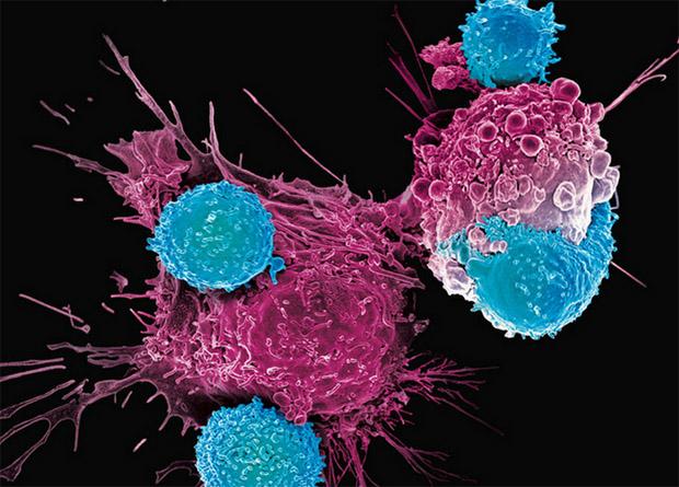 CAR-Т-лимфоцитам предложили давать отдых
