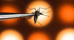Эпидемиологи нашли спасение от лихорадки денге