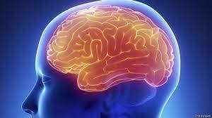 Здоровье мозга: как сохранить самый умный орган